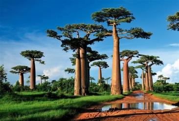Viaje de verano del STEC-IC a Madagascar